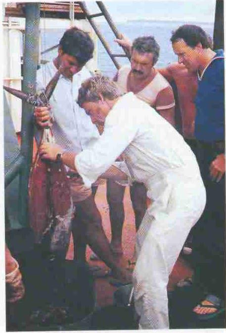 Тунцов в Индийском океане ловят спиннингом с борта — было бы время. 1985 год. 20-ый рейс НИС «Профессор Богоров».