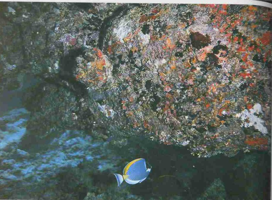 Подводный мнр Полинезии.