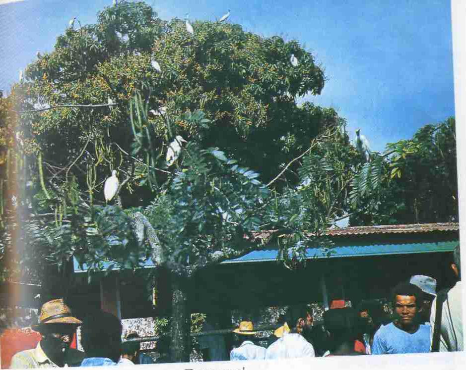 Райские птицы в райском месте - Полинезия!