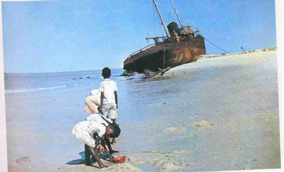 «Отлив. По едва покрытому водой коралловому дну бродят малыши. Что-то собирают...», стр. 116
